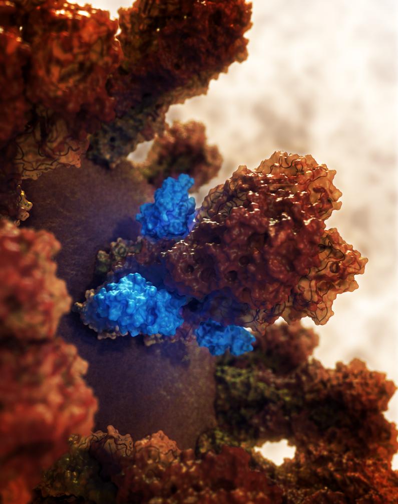 Influenza Hemagglutinin Binder by vmulligan