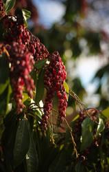 Red flowering bush by vmulligan