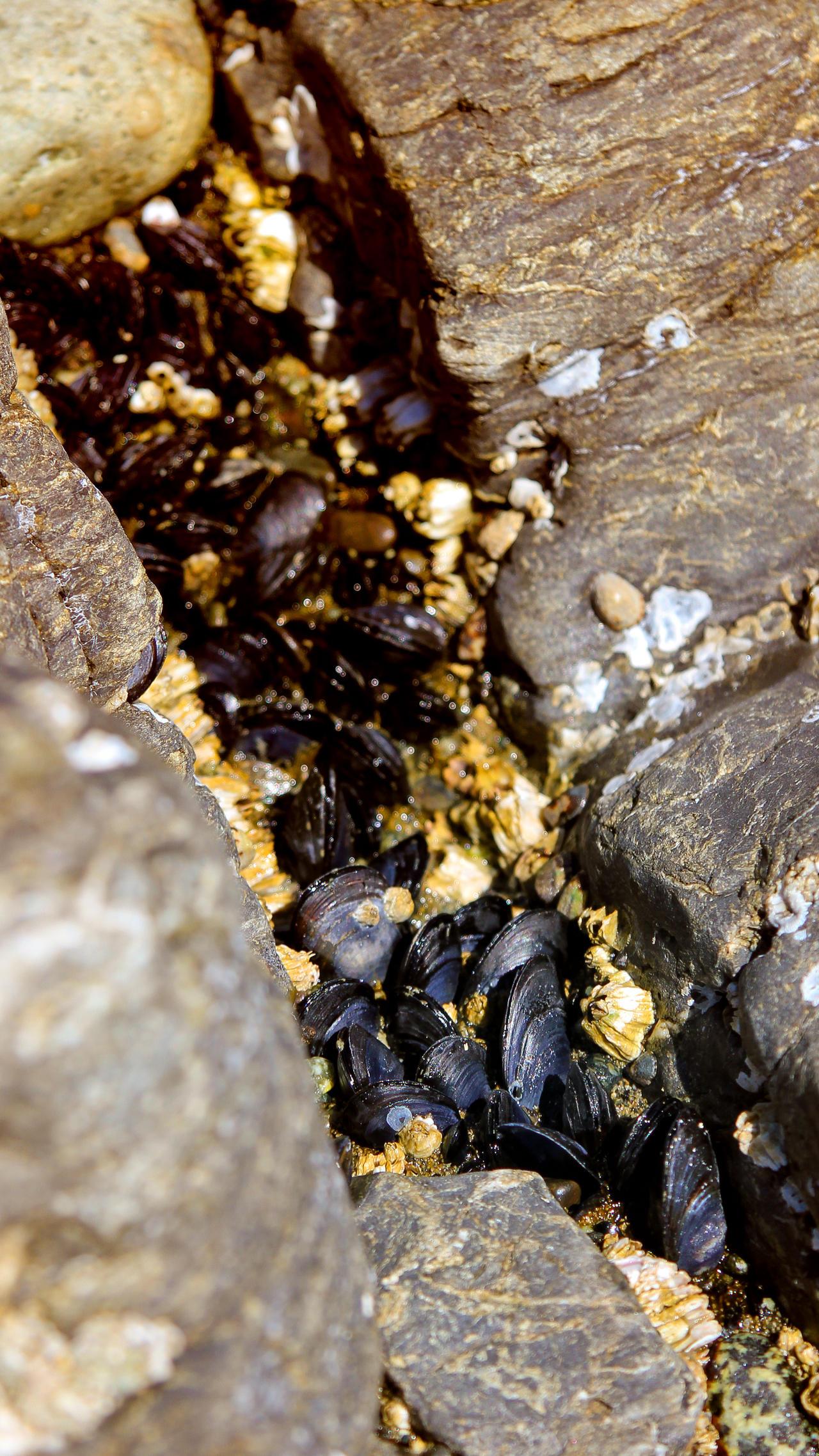 Mussels by vmulligan