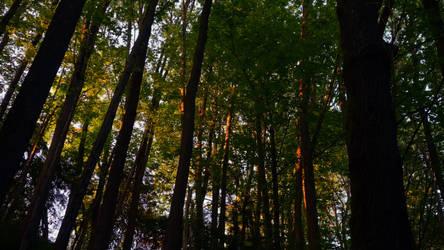 Sunset in Ravenna Wood by vmulligan