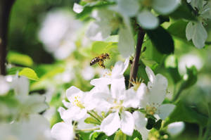 Bee by loptix