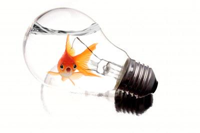 fish aquarium light bulbs lightbulb fish tank 2017. Black Bedroom Furniture Sets. Home Design Ideas