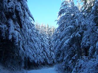 winter road by dragonBalzl87