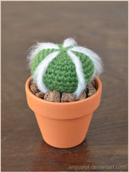 Cactus by anguana