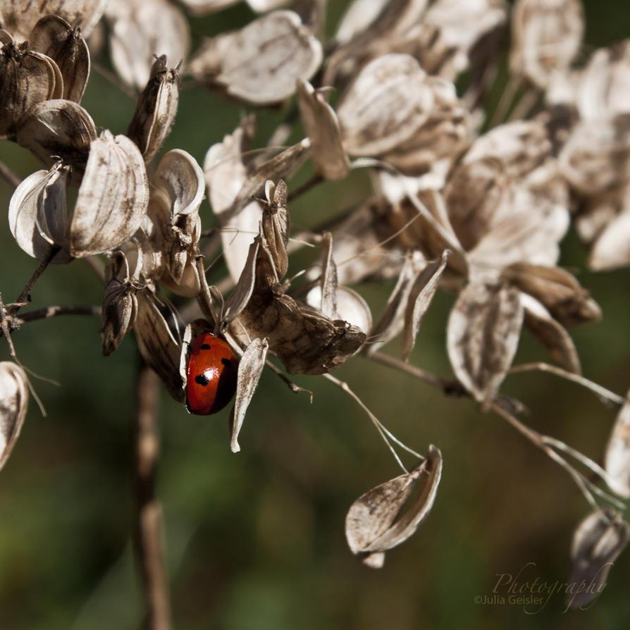 ladybug by JuliaGeisler