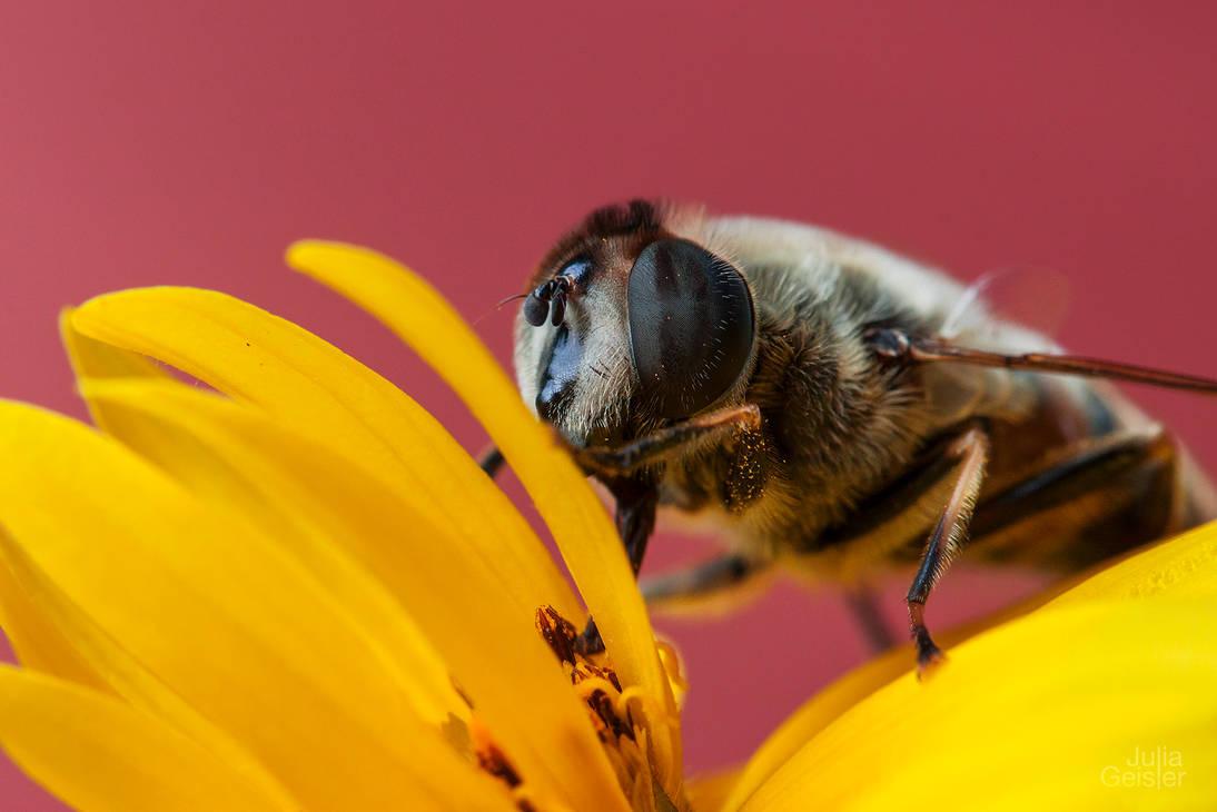 Bee by JuliaGeisler