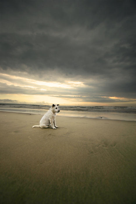Kuta puppy by fendra