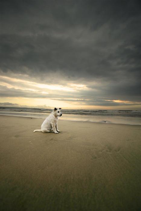 Kuta puppy by fendra