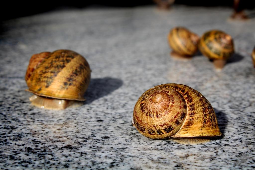 Snails by Minarya