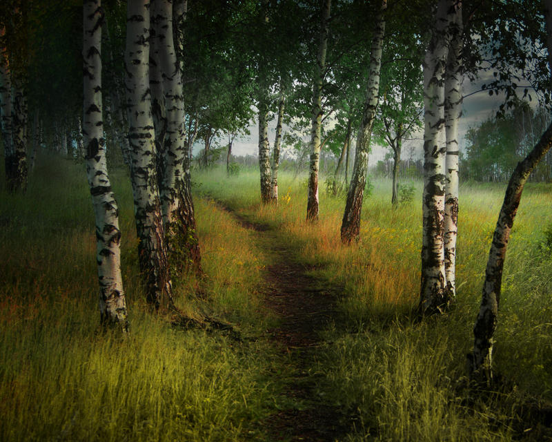 path in the birch - photo #11