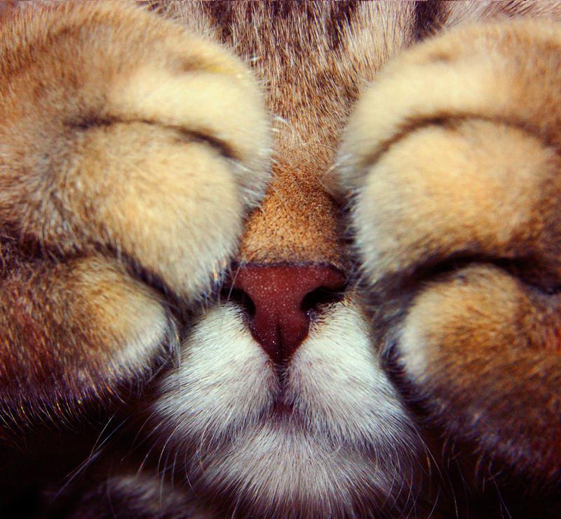Shy Kitten Stock 1 by ElenaDudina