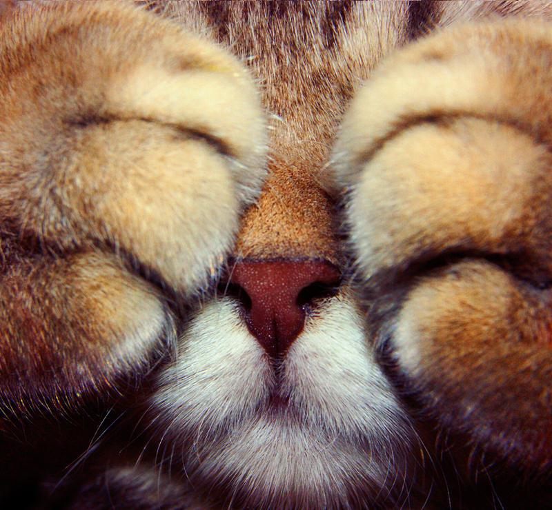 Shy Kitten Stock 1