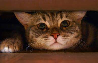 My trench Kitten Stock 2