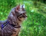 El paseo Kitten Stock 3