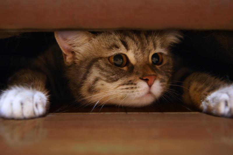 My trench Kitten Stock 5 by ElenaDudina