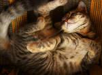 Asleep Kitten Stock 7