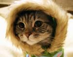 Hello Kitten Stock 8