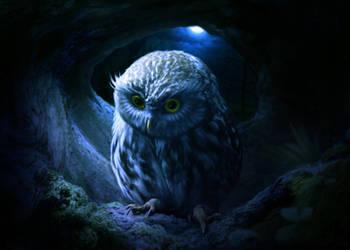 Little owl by ElenaDudina
