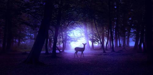 Night forest by ElenaDudina