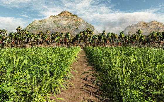 Crops and coconut trees