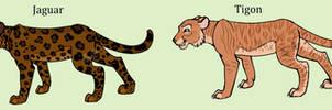 Closed - Big Cat Adopters