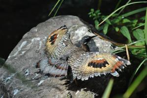 Sunbathing Bird by Sku1c