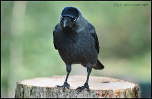 Crow by Sku1c