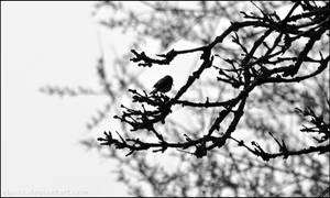 Lonely Sparrow by Sku1c