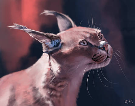 Red Caracal