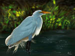 Common Egret digital painting by tmolnar0831