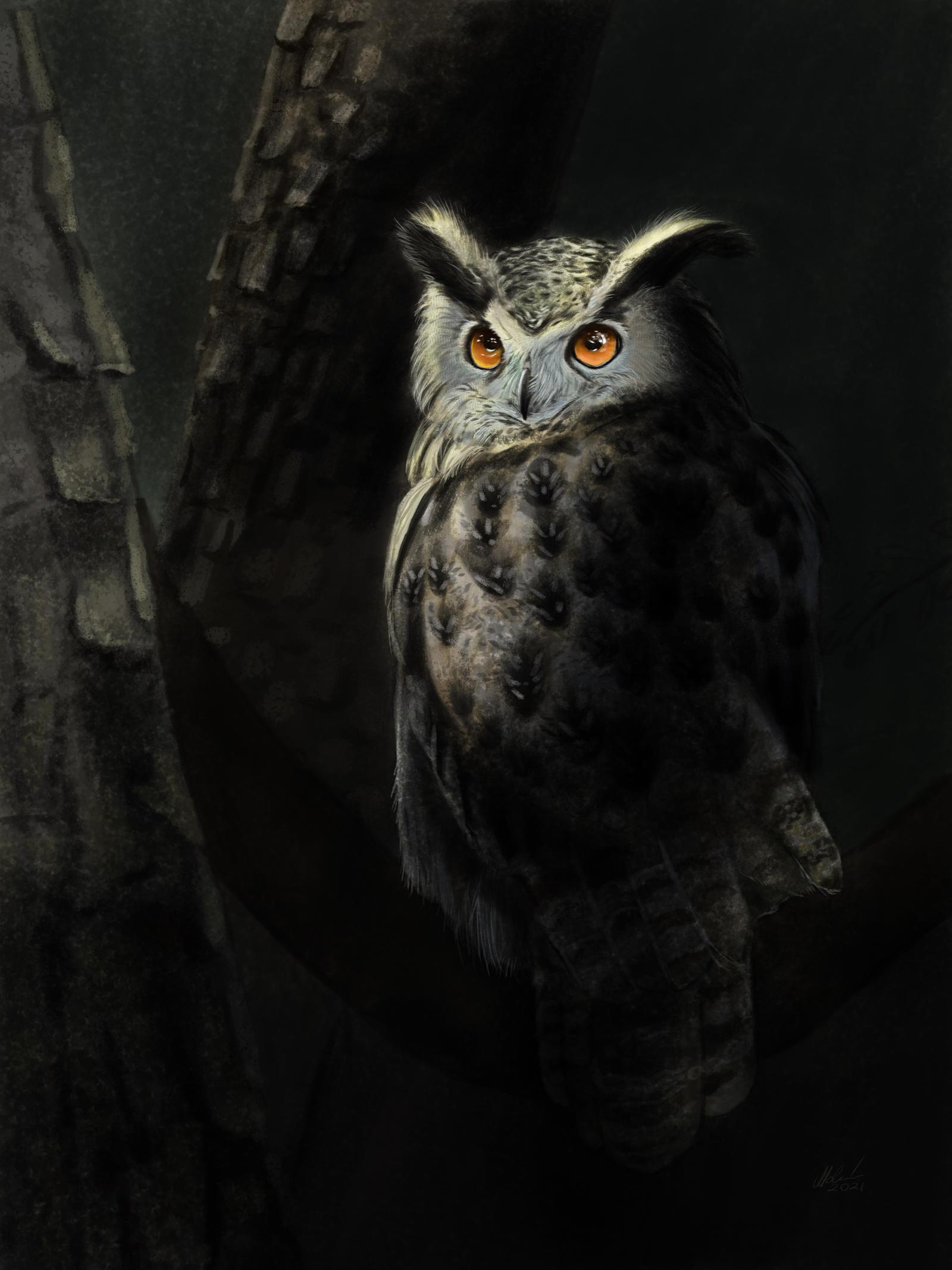Owl in Soft Light