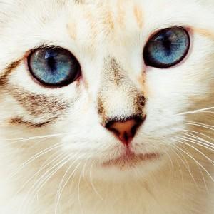 Dinari-San's Profile Picture