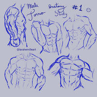 Male Torso Anatomy Study by LaraHemille