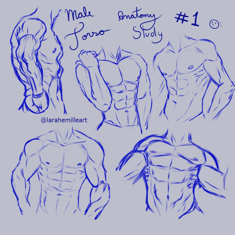 Male Torso Anatomy Study By Larahemille On Deviantart