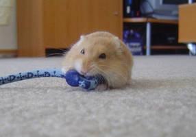 Hamster by benx3000
