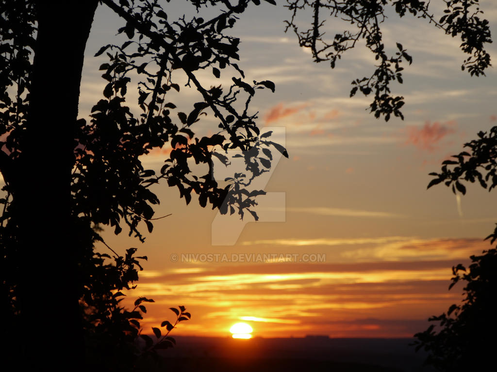 sunset with leaves and tree by NiVosta