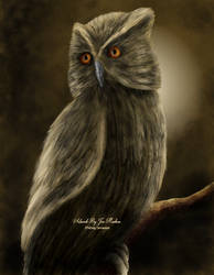 Owl by JPMNeg