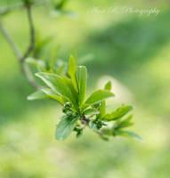 Green. by alina0