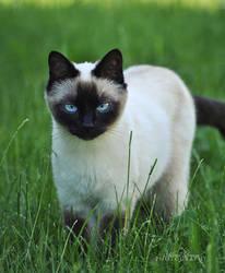 Cat. by alina0