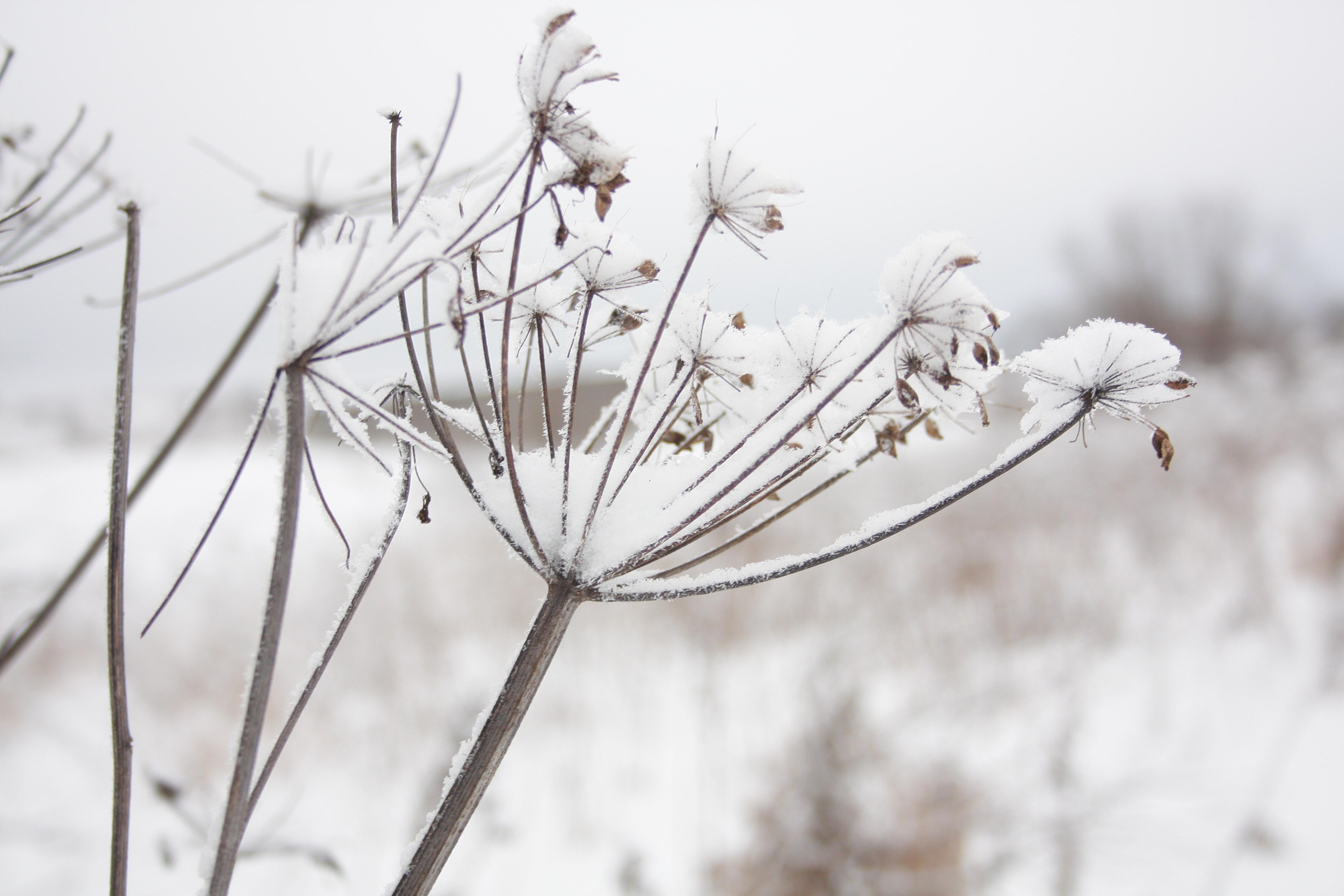winter flower by qmor on deviantart, Beautiful flower