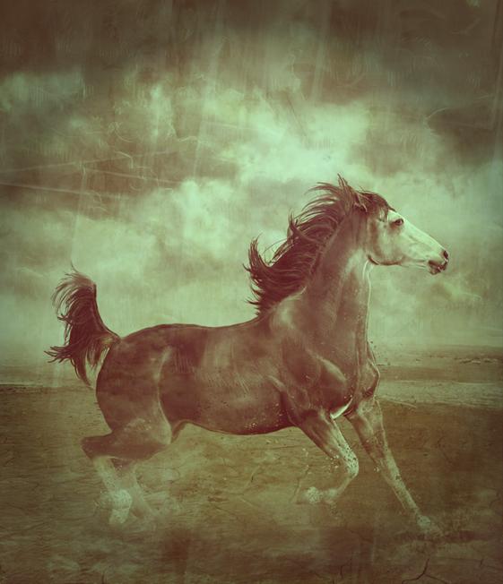 ^ Twilightstars ^ horses Desert_horse_by_abyssus_angelus-d2ybdnv