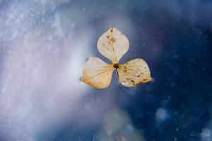 Drifting away by Marloeshi