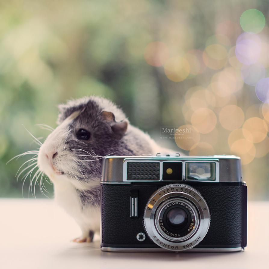 I'm a photographer piggie! by Marloeshi