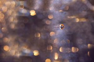The ladybug by Marloeshi