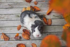 Autumn II by Marloeshi