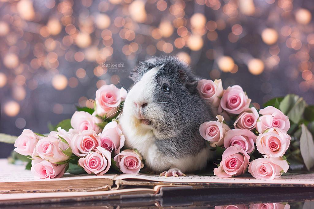 Mieps Roses by Marloeshi