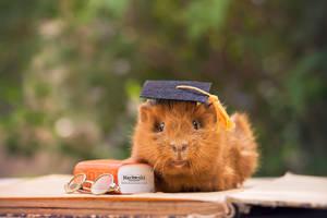 Graduation Pig by Marloeshi
