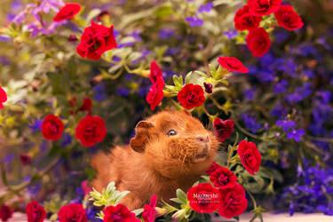 Fluffy Flowers by Marloeshi