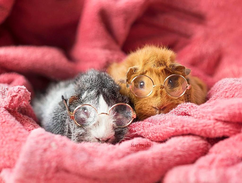 Sleepy pigs by Marloeshi
