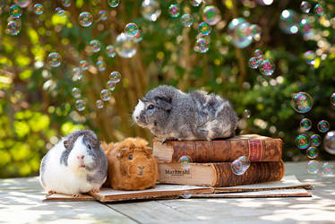 Piggies, books and bubbles